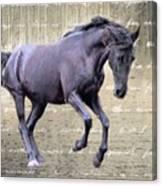 Blackhorse Poetry Canvas Print