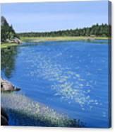 Blackstone Bog Canvas Print
