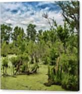 Blackwater Swamp Canvas Print