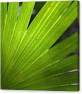 Blades Of Green Canvas Print