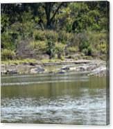 Blanco River - Texas Canvas Print