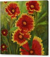Blanket Flowers Canvas Print