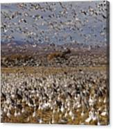 Blast Off Bosque Del Apache Canvas Print