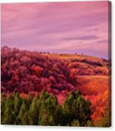 Blazing Autumn Canvas Print