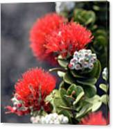 Blazing Blooms Of Ohia Flowers Canvas Print