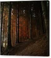 Blazing Forest Canvas Print