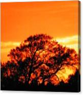 Blazing Oak Tree Canvas Print