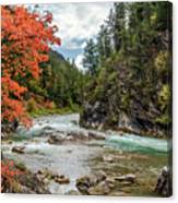 Blazing Red Mountain Maple, Greys River Canvas Print