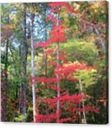 Blazing Red Canvas Print