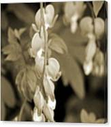 Bleeding Hearts In Sepia Canvas Print