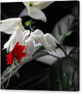 Bleeding Heartwine Flower Canvas Print