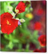 Bleeding Spring 3 Canvas Print