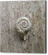 Blended Shell Canvas Print