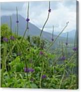 Blissful Purple Canvas Print