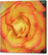 Blood Orange Rose Canvas Print