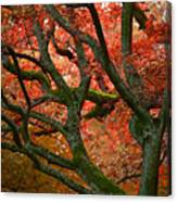 Blood Red Autumn Tree Canvas Print