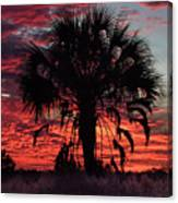 Blood Red Sunset Palm Canvas Print