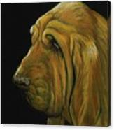 Bloodhound Canvas Print