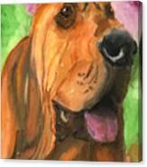 Bloodhound Dog Art Canvas Print