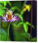 Bloom N Bud  Canvas Print