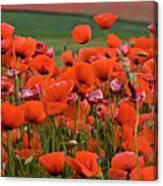 Bloom Red Poppy Field Canvas Print