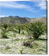 Bloomin Cactii Canvas Print