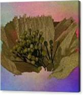 Blooming 2 Canvas Print