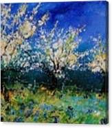 Blooming Appletrees 56 Canvas Print