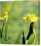 Blooming At Green Lake Canvas Print