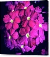 Blooming Crush Canvas Print