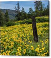 Blooming Fence Canvas Print