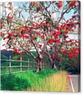Blooming Flamboyan Trees Along A Country Road Canvas Print