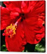 Blooming Flower 2 Canvas Print
