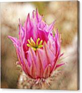 Blooming For You Canvas Print