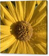 Blooming In My Ditch Canvas Print