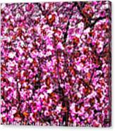 Blooming Pink Canvas Print