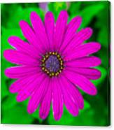 Blooming Purple Canvas Print