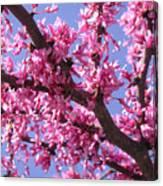 Blooming Red Buds Canvas Print