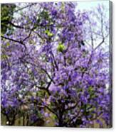 Blooming Tree With Purple Flowers Canvas Print