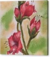Blooms 'n Red Canvas Print