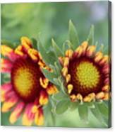 Blooms Of Color Canvas Print