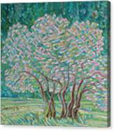 Bloomy Trees Canvas Print
