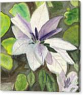 Blossom At Sundy House Canvas Print