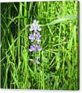 Blossom In The Grass Canvas Print