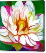 Blossom Lotus Flower Canvas Print