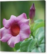 Blossom Of Allamanda Canvas Print