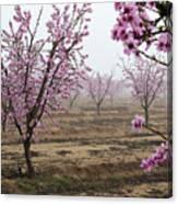 Blossom Trail Canvas Print