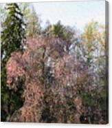 Blossom Tree Impressionist Canvas Print
