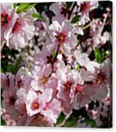 Blossoming Almond Branch Canvas Print