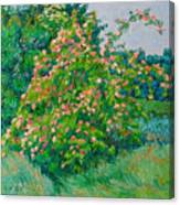 Blossoming Bush Landscape Canvas Print